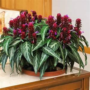 Pflegeleichte Zimmerpflanzen Mit Blüten : bl hende zimmerpflanzen farbige deko ideen mit pflanzenarten ~ Sanjose-hotels-ca.com Haus und Dekorationen