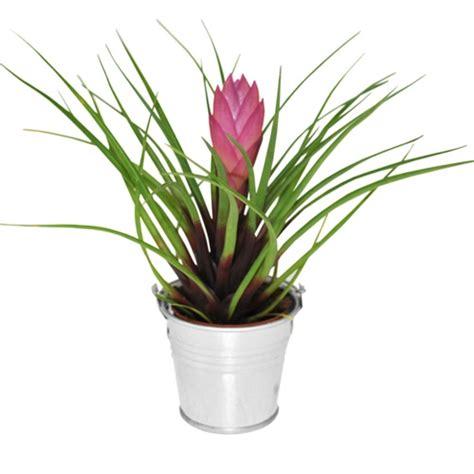 mini plante exotique fleurie un cadeau d invit 233 pour tous