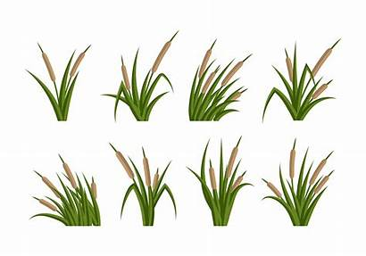 Cattails Vector Flat Drawing Background Cattail Pond