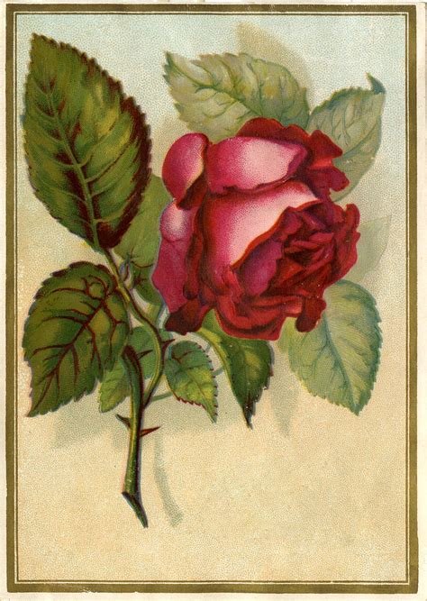 victorian images beautiful red rose  graphics fairy