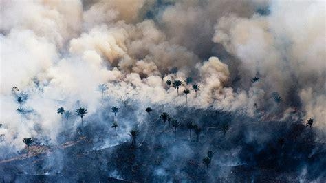 devastating birds eye view  earths vanishing rainforests
