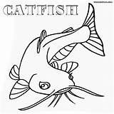 Catfish Fish Coloring Pages Cat Drawing Print Template Bullhead Getdrawings Sketch Animal sketch template