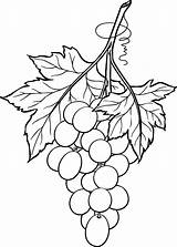 Grapes Bunch Drawing Line Printable Coloring Wine Glass Stained Grape Patterns Outline Clip January Artwork Leaf Fruit Pattern Beccy Originally sketch template