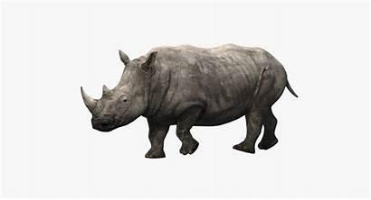 Rhino Animated Animals Missset 3d1