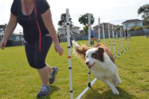 Agility & Obstacle Dog Training Courses