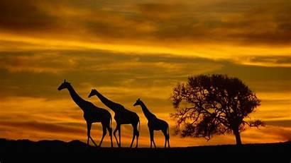 Africa Background Sunset Desktop Wallpapers