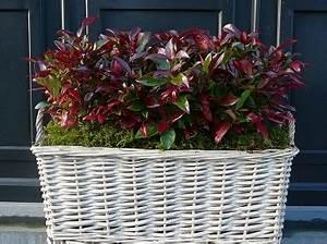 Plantes D Hiver Extérieur Balcon : plantes pour l 39 am nagement d 39 un balcon en automne ~ Nature-et-papiers.com Idées de Décoration