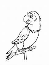 Parrot Coloring Pages Printable Animals Birds sketch template