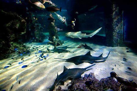 sea world learning in sydney sea aquarium best travel