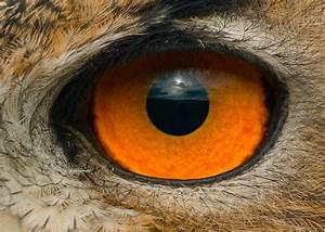 Avian Eye - The High Technology Of Nature