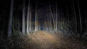 Download Foto Forest Walpaper Gratis