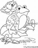 Tadpole Coloring Pages Frog Drawing Template Getdrawings Printable Templates Getcolorings sketch template