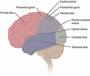 Memory  Biology  Types  And Processes