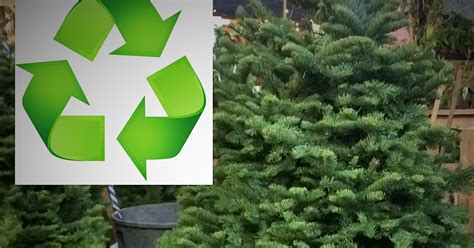 recycle christmas trees near me how to recycle your tree in san francisco lostinsf
