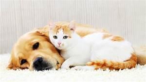 Own A Dog Or A Cat In Montreal  Here U0026 39 S What U0026 39 S Next