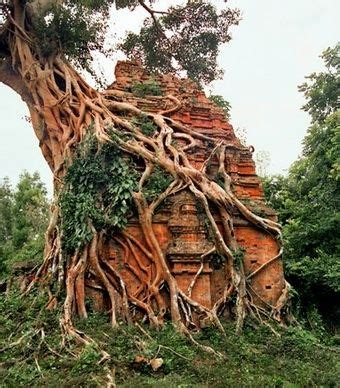 A tree grows from a structure