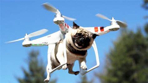 PsBattle: A drone carrying a pug : photoshopbattles