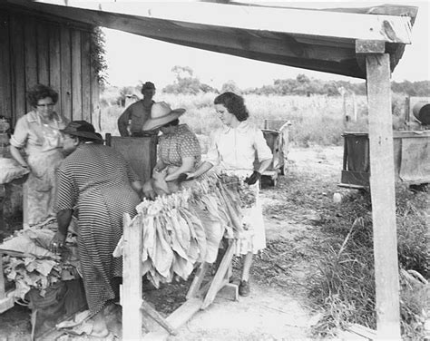 The Farmers Shed Sc by Tobacco Industry Archives Special Collections Staff Picks