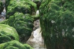 Algen Im Teich Entfernen : algen im gartenteich bek mpfen schonende und biologische methoden ~ Orissabook.com Haus und Dekorationen