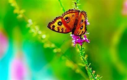 Butterfly Wallpapers Buetiful Allhdwallpapers