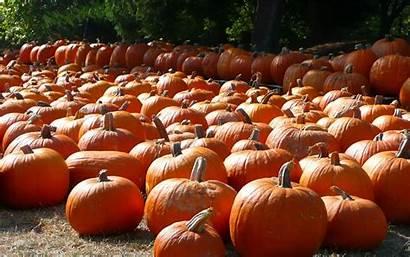 Pumpkin Wallpapers Pumpkins Desktop Backgrounds Keywords Wallpapersafari