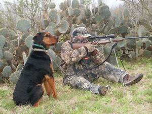 training a coyote decoy dog the early days