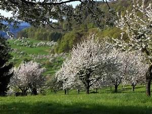 Maden In Kirschen : kirschen landschaften sind bedroht von einer kleinen ~ Lizthompson.info Haus und Dekorationen
