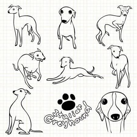 foto de Stock Photo in 2020 Italian greyhound dog Dog line