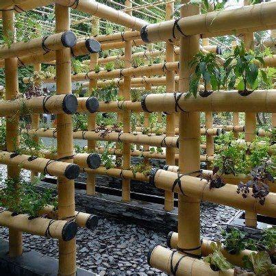 Bamboo Vertical Garden by Bamboo For Vertical Gardens Organic Growing