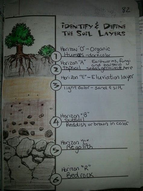soil layers soil layers  grade science worksheets