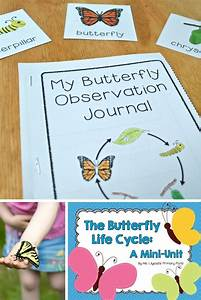 Butterfly Life Cycle Unit For Preschool  Kindergarten  Or