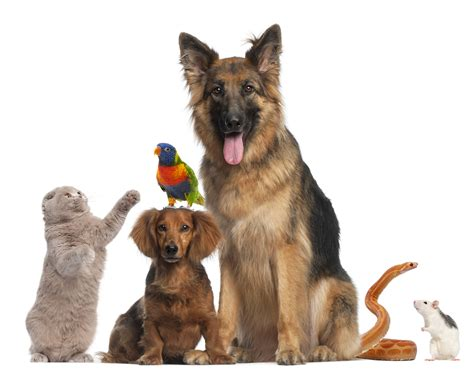 3 Things That Growing Up With 7 Pets Has Taught Me