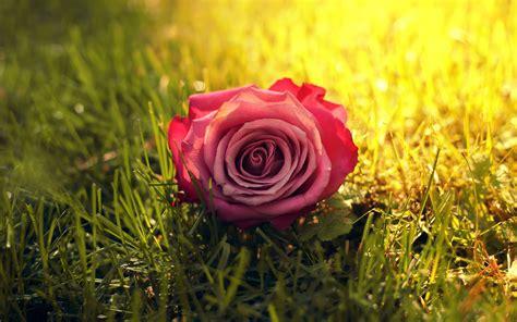 flower backgrounds tumblr pixelstalknet