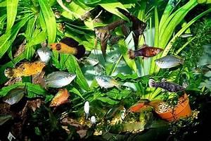 Optimale Aquarium Temperatur : aquarium temperature for tropical fish aquarium design ideas ~ Yasmunasinghe.com Haus und Dekorationen