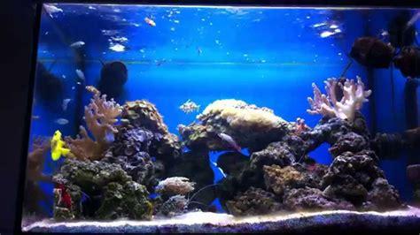 aquarium eau de mer aquarium eau de mer