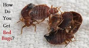 how do you get bed bugs With bugs that get in your bed