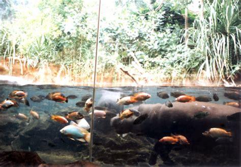 dissertation  zoo design pygmy hippo case study