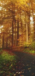 Autumn, 4k, Wallpaper, Path, Road, Foliage, Trees, Forest