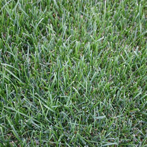 cost of grass seed harmony 500 sq ft fescue sod 1 pallet hh500f1 the home depot