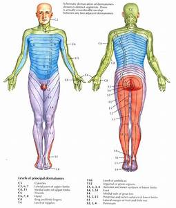 Dermatomes | Physical therapy, Therapy and Pa school