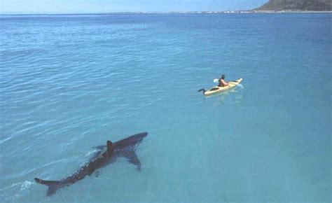 U Boat Hai by Tiere Gro 223 Klein Haie