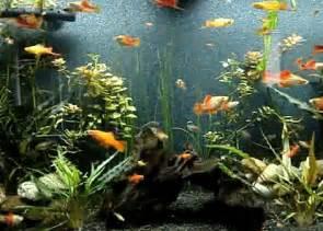 FishTank gif gif by kat1154 Photobucket