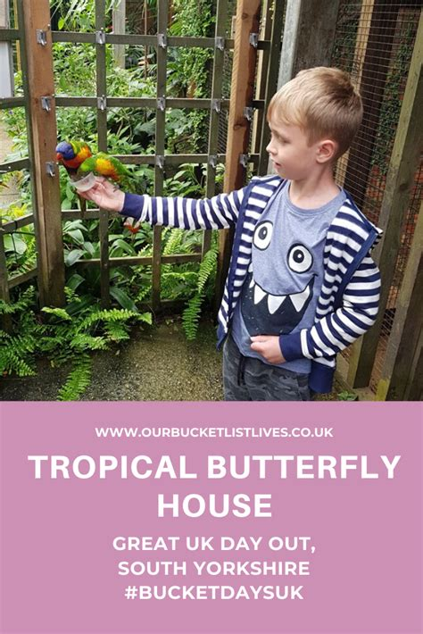 Tropical Butterfly House - UK Family Day Out - South ...