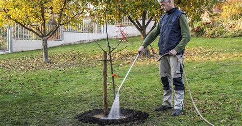 Obstbaeumchen Pflanzen Schritt Fuer Schritt by Quittenbaum Pflanzen Mein Sch 246 Ner Garten