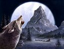 Image result for Free Wolf Wallpapers for Kindle Fire
