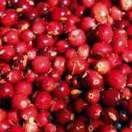 Cranberries Wachsen Auch Im Garten Gartentechnikde