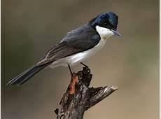Birding NSW Birdwatching Australia Birdwatching New
