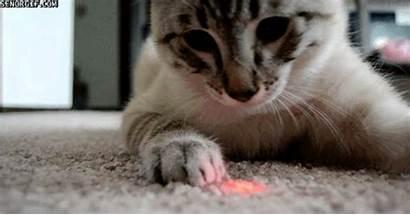 Gatos Gifs Animados Perros Laser Cat Cats