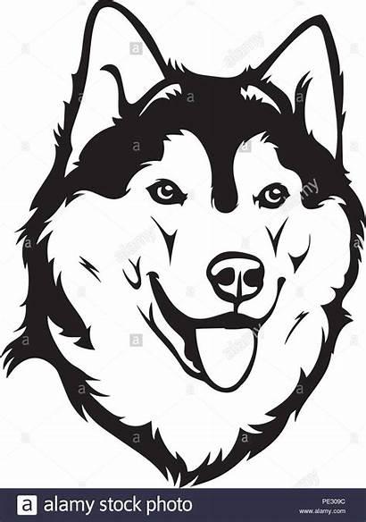 Husky Dog Siberian Puppy Face Head Pet