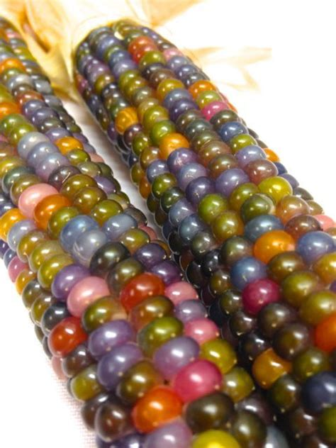 gem corn glassy avocado glass gem corn to check out when i have time lol